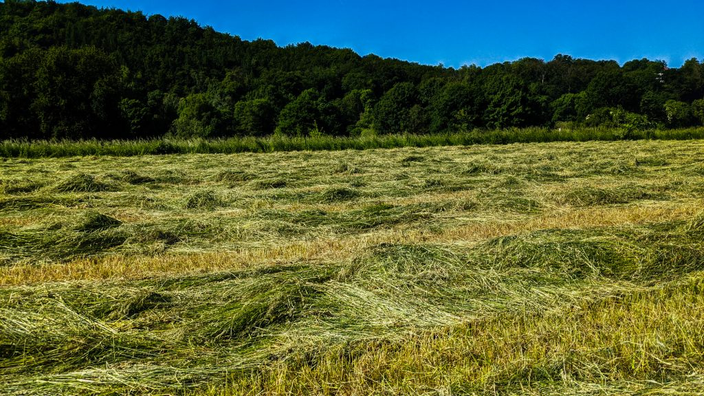 Getrocknetes Gras. Getrocknetes Gras. Getrocknetes Gras.